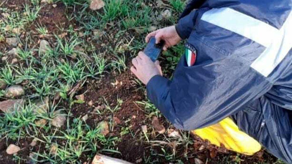 """""""Avvistata una pantera a Locorotondo"""", ma è un falso allarme: rinvenute impronte di un 'grosso cane'"""