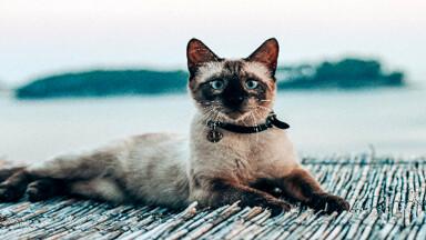 Gatti al guinzaglio è solo moda oppure vi sono realmente dei benefici per il pet?