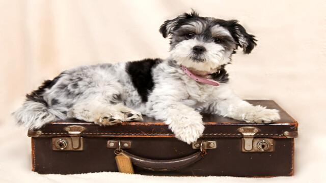 Viaggiare all'estero: passaporto europeo per animali. Cos'è e come funziona