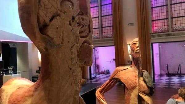 """""""Bodies Exhibition"""", a Bari la mostra di veri corpi umani"""