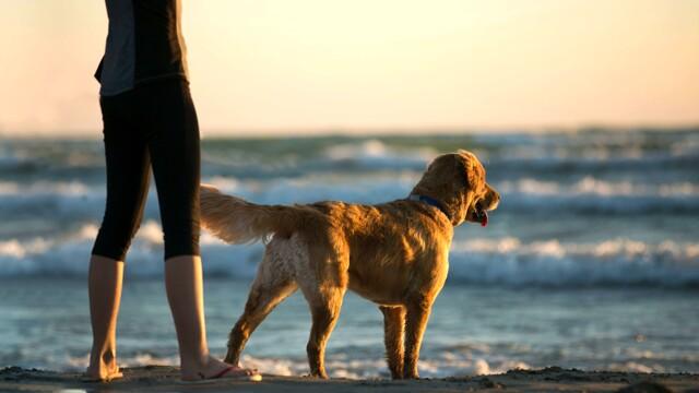 Piscina, mare e montagna: consigli utili per insegnare a nuotare al cane