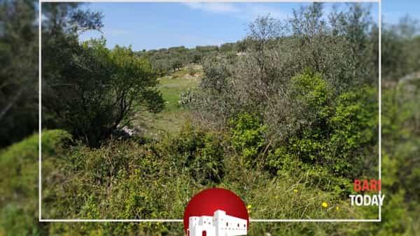 Bari archeo - trekking a Lama Misciano