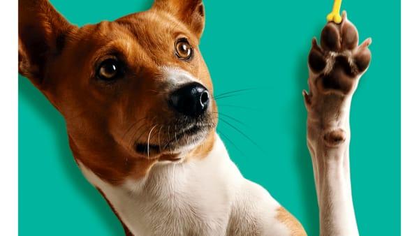 'Pet Friendly', al Parco Commerciale Auchan di Casamassima attività di sensibilizzazione a favore dell'affido