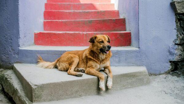Strage di cani in Pakistan