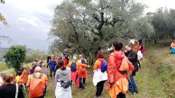 'Camminata tra gli olivi', itinerari, passeggiate e degustazioni nella terra dell'olio extravergine