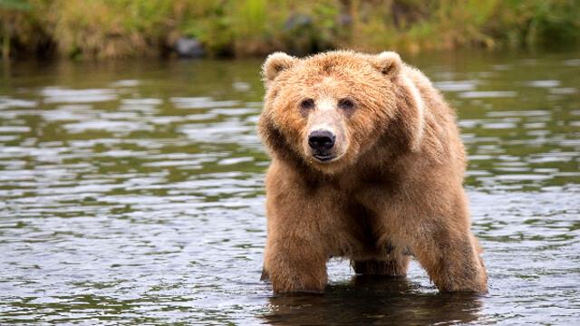 Avvistamento orsi: cosa fare se li incontriamo in montagna