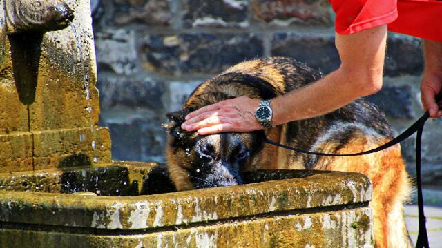 Caldo e animali domestici: tutti i consigli per aiutare i nostri amici pelosi a sopravvivere all'afa