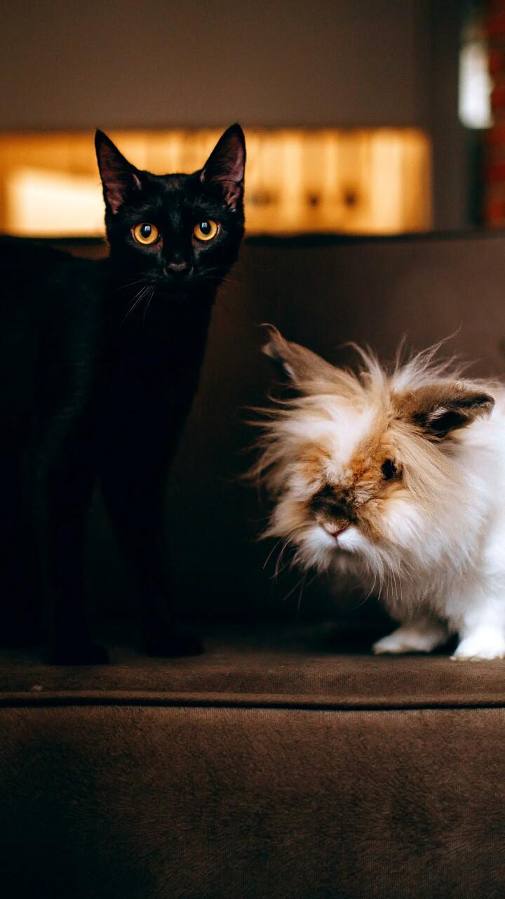 In crescita il numero degli abbandoni di gatti, tartarughe e conigli