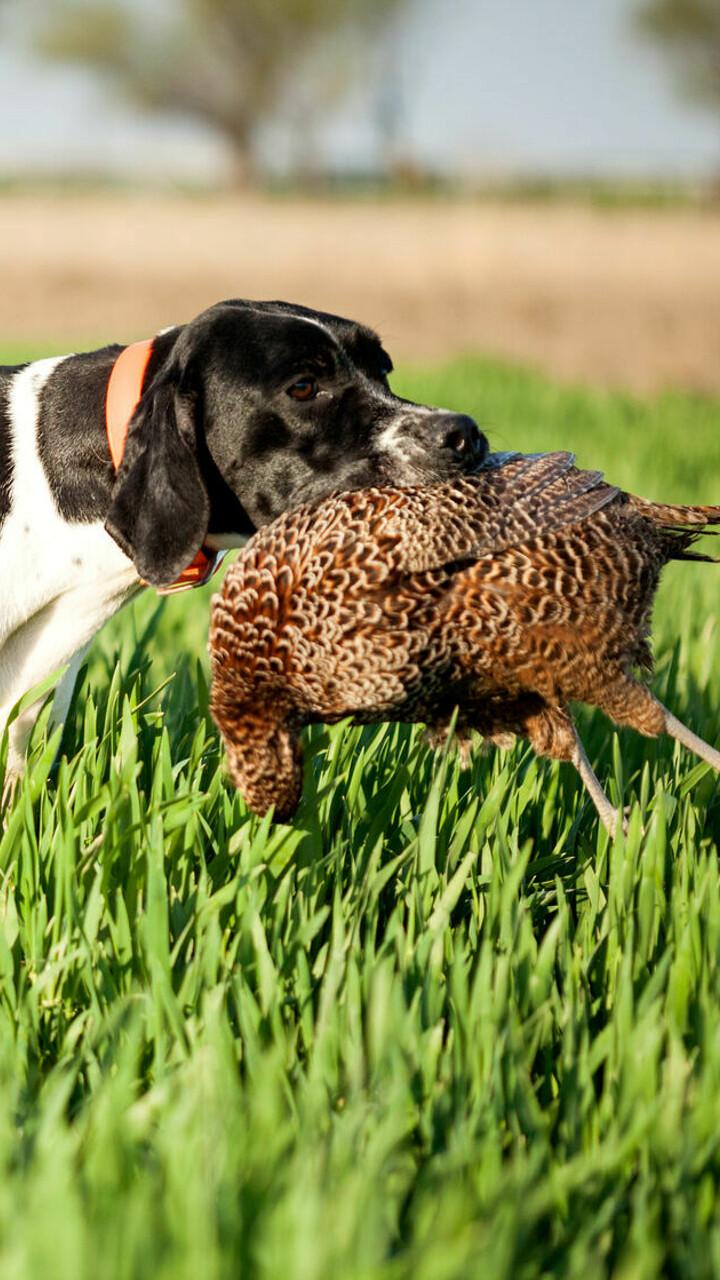 Il triste fenomeno dei cani da caccia